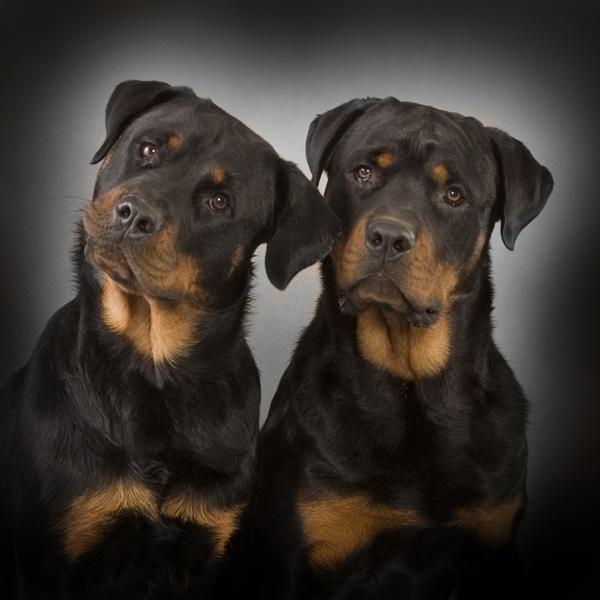 fotoshoot van je hond