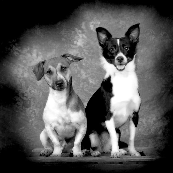huisdieren fotoshoot