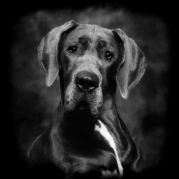 foto van de hond